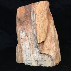 Xilópalo, tronco de árbol fósil natural de Madagascar