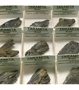 Taramíta de Brasil en cajíta individual de colección