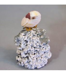 Loro de Cobaltocalcita y Jaspe sobre cuarzo, galena y pirita de Perú