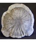 Pirita sol o radial de U.S.A. en peana desmontable