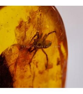 Pieza excepcional de araña en Ámbar fósil del Báltico