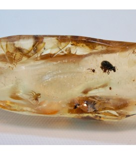 Escarabajo y otros insectos en Copal fósil de Madagascar