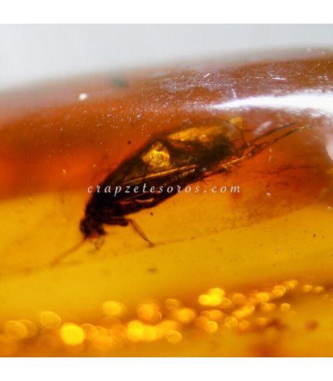 Ámbar fósil con insectos del Báltico