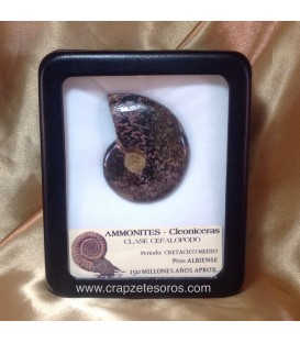 Ammonites Cleoniceras con dendritas y efecto opaliscente del Cretácico protegido en estuche.